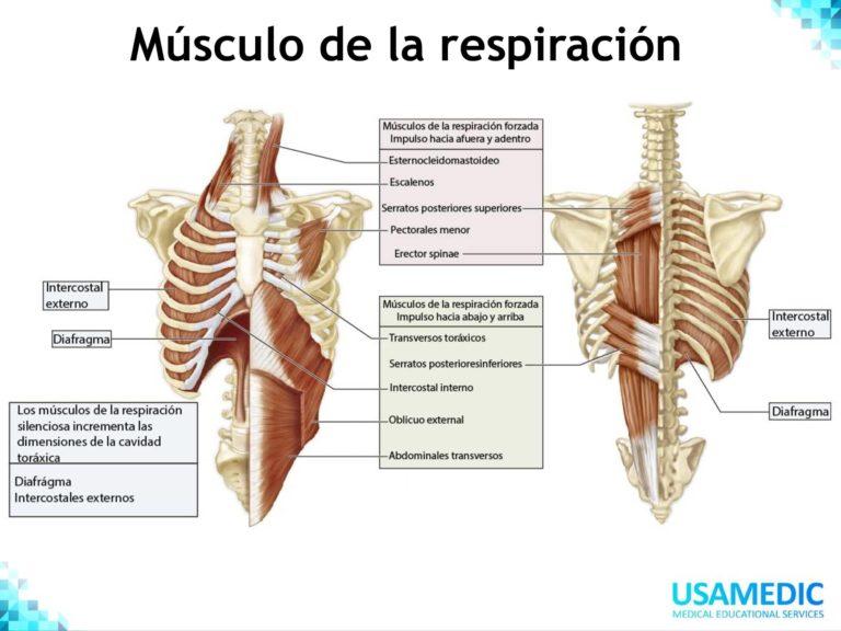 RESIDENTADO MÉDICO FISIOLOGIA USAMEDIC 3